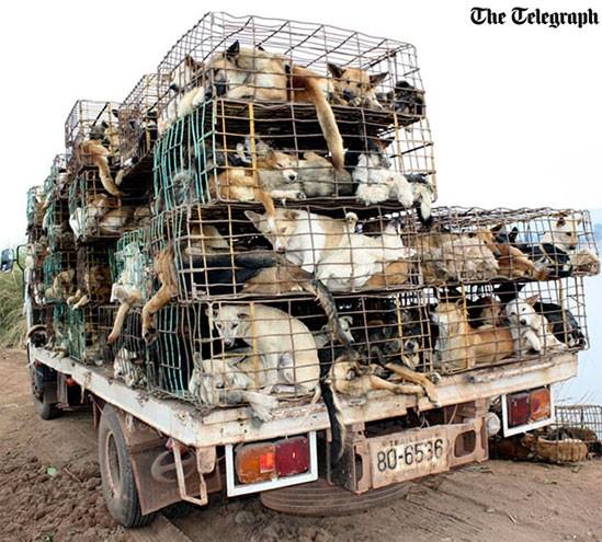 Consumo de carne de cachorro aumenta no Vietnã