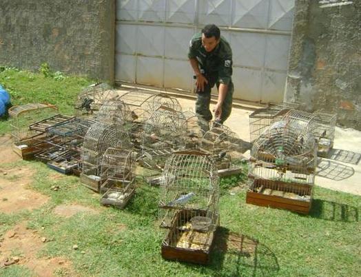 PM apreende 29 pássaros silvestres com morador do bairro Santa Maria
