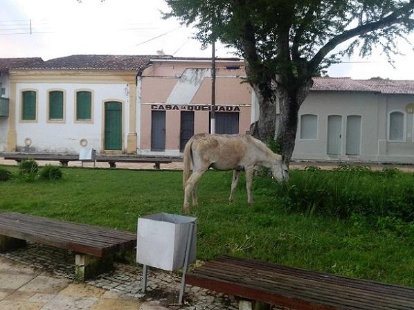 É público e notório a presença de animais de grande, médio e pequeno nas ruas e praças de São Cristóvão. (Foto: leitor SE Notícias)