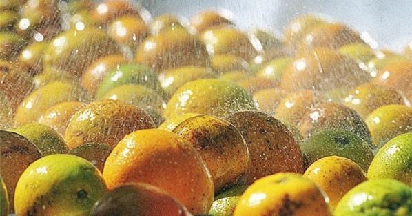 Sergipe é o segundo estado do Nordeste a ter crescimento nas exportações do agronegócio