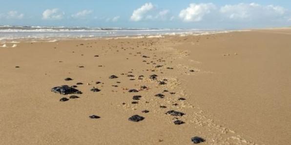 Um paraíso para as tartarugas olivas pode estar ameaçado no litoral de Sergipe.