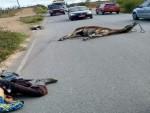 Vaqueiro e jumento morrem após acidente na Rota do Sertão