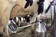 Ministério da Agricultura proíbe leite em pó importado na produção leiteira