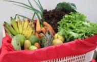 Agricultura familiar dá sabor aos festejos juninos em Sergipe