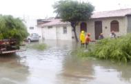 Três árvores caem devido às chuvas em Aracaju