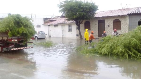 Três árvores cairam devido às chuvas em Aracaju