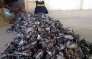 Dezoito caçadores são detidos com mil aves mortas no interior de Sergipe