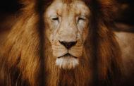 No Dia Internacional dos Animais, MPF reforça pedido de interdição total imediata do zoológico de Aracaju