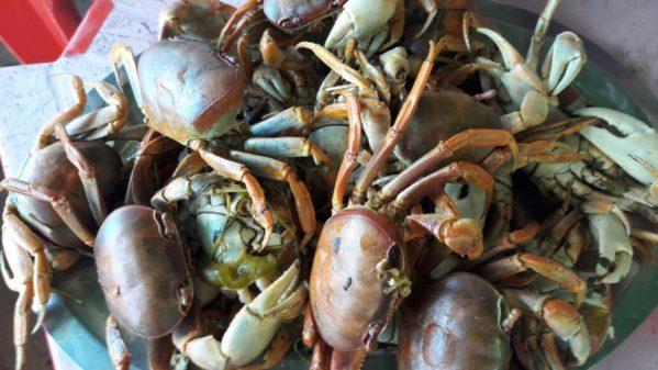 Período de proteção da reprodução do caranguejo-uçá começa em janeiro