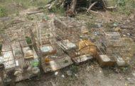 Pelotão Ambiental liberta aves mantidas em cativeiros, no interior de Sergipe
