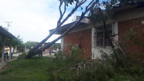 Árvore cai e danifica prédio da Universidade Federal de Sergipe