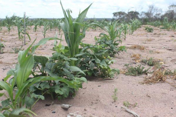 Catorze municípios de Sergipe estão em situação de emergência por causa da seca