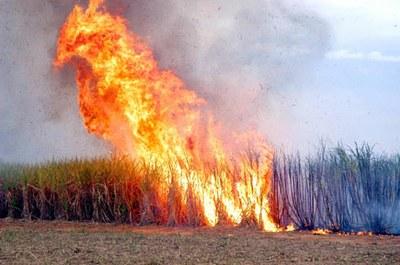 Adema alerta produtores para queima controlada da palha de açúcar