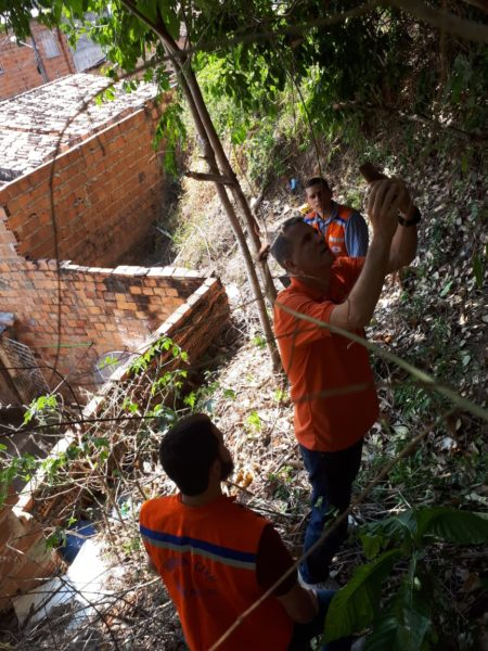 Defesa Civil de Aracaju avalia risco de queda de árvores no Morro do Urubu