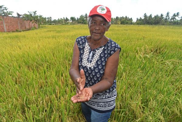 Agricultores receberão recursos do Garantia-Safra em dezembro, diz Governo