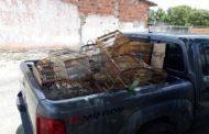 Polícia encontra cativeiro clandestino com cerca de 200 aves no interior de Sergipe