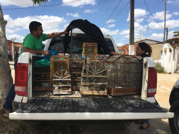 Adema e Polícia Ambiental apreendem animais silvestres em Lagarto