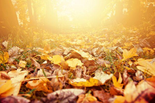 Outono: doenças respiratórias e alergias se agravam nesta estação
