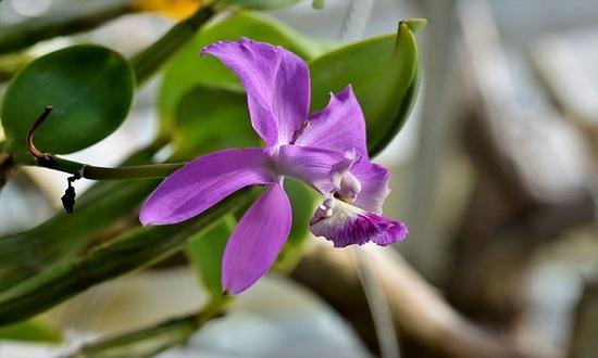 Exposição de Orquídeas acontece no Museu da Gente