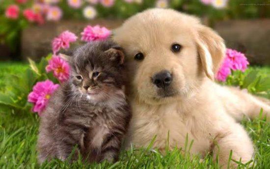 RioMar Aracaju promove a 19ª campanha de adoção de pets, em parceria com a Adasfa