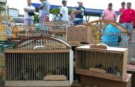 Pelotão Ambiental da PM apreende 69 aves silvestres no interior de Sergipe