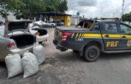 Polícia Rodoviária Federal apreende 60 quilos de maconha em Frei Paulo