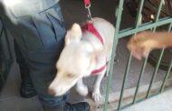 Polícia Militar prende homem por maus tratos a animal em Aracaju