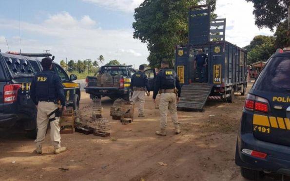 Polícia Rodoviária Federal apreende em Sergipe 112 animais silvestres