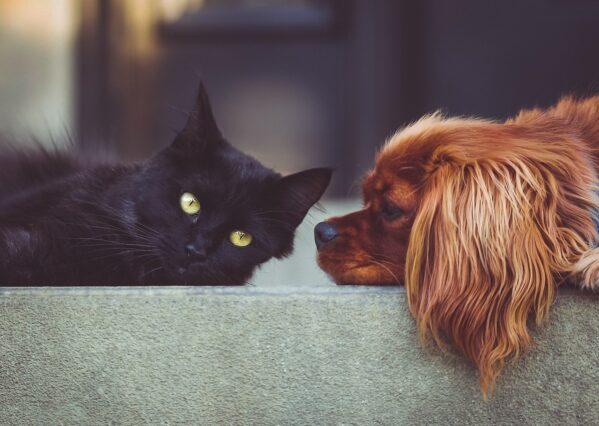 Com aprovação de projeto de lei que aumenta penas a agressores de cães e gatos, SSP destaca trabalho policial de combate aos crimes