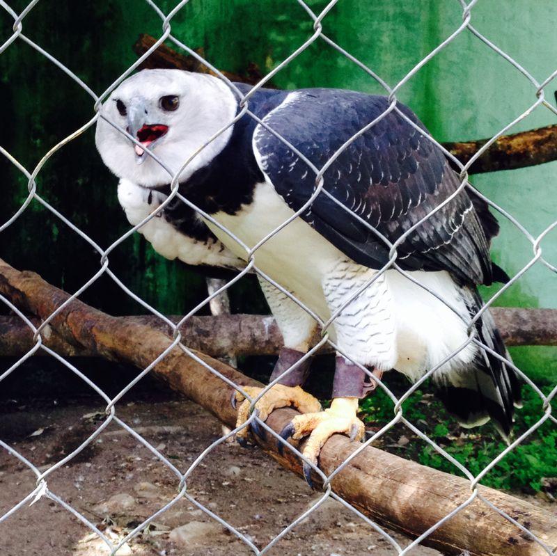 Governo sanciona lei que torna Parque dos Falcões patrimônio cultural de Sergipe