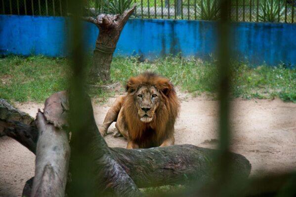 Governo do Estado apresenta à imprensa novas instalações do Zoológico de Aracaju