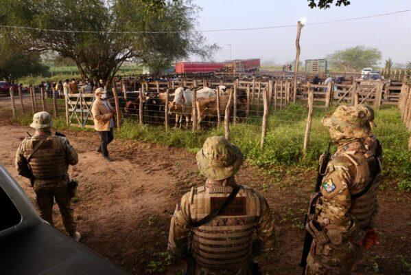 Polícia flagra feira com venda de gado sem indicação de origem em Nossa Senhora da Glória