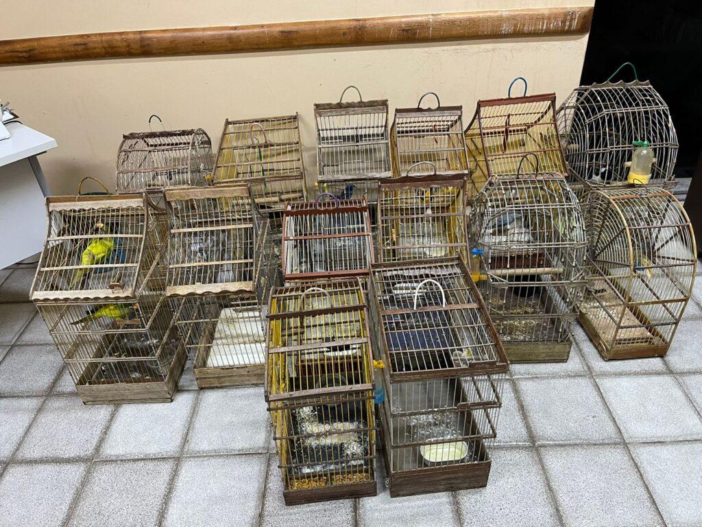 Adema recebe 15 aves que estavam sendo mantidas em cativeiro