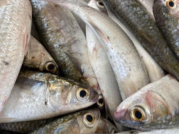 Prefeitura de Aracaju realizará Feira de Pescados entre 9 a 11 de setembro