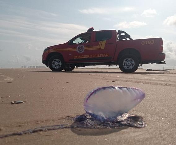 Corpo de Bombeiros alerta sobre a presença de caravelas no litoral sergipano